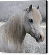 Snow Pony Canvas Print