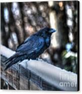 Snow Raven Canvas Print by Skye Ryan-Evans