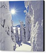 Snowscape Snow Covered Trees And Bright Sun Canvas Print