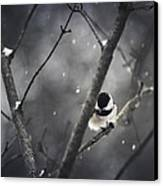 Snowy Chickadee Canvas Print by Shane Holsclaw