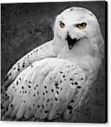 Snowy Owl Calling Canvas Print by Ed Pettitt