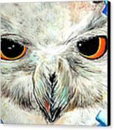Snowy Owl - Female - Close Up Canvas Print by Daniel Janda