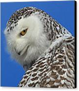 Snowy Owl Greeting Card Canvas Print by Everet Regal