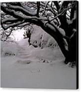 Snowy Path Canvas Print by Amanda Moore