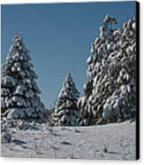 Snowy Pines Canvas Print by Jeff Swanson