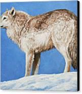 Snowy Wolf Canvas Print