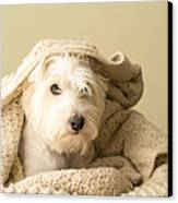 Snuggle Dog Canvas Print