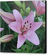 Soft And Beautiful Canvas Print by Victoria Sheldon
