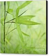 Soft Bamboo Canvas Print by Priska Wettstein