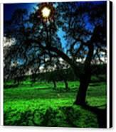 Solar-oak Eclipse Canvas Print