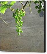 Solitary Grapes Canvas Print by Deb Martin-Webster