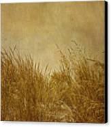 Solitude Canvas Print by Kim Hojnacki