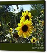 Song Of The Sunflower Canvas Print