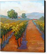 Sonoma Vineyard Canvas Print by Carolyn Jarvis