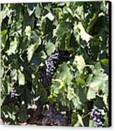 Sonoma Vineyards In The Sonoma California Wine Country 5d24489 Canvas Print