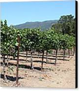 Sonoma Vineyards In The Sonoma California Wine Country 5d24492 Canvas Print