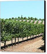Sonoma Vineyards In The Sonoma California Wine Country 5d24506 Canvas Print