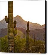 Sonoran Desert II Canvas Print by Robert Bales