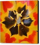 Soul Of A Tulip Canvas Print by Sonali Gangane