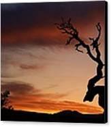 Southwest Tree Sunset Canvas Print by Michael J Bauer