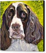 Spaniel The Eyes Have It Canvas Print by Susan A Becker