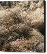 Sparkling Grasses Canvas Print
