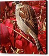 Sparrow Canvas Print by Rona Black