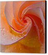 Spiral Rose Canvas Print by Juergen Roth