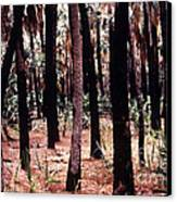 Spirit In The Trees Canvas Print by Steven Valkenberg
