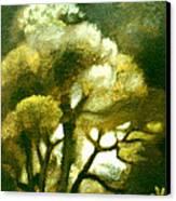 Spirit Of The Tarairi Tree Canvas Print by Patricia Howitt
