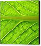 Splash Of Green Canvas Print by Tom Druin