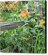 Split Rail Fence Canvas Print by Laurinda Bowling