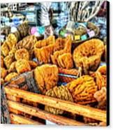 Sponge Worthy Canvas Print by Debbi Granruth