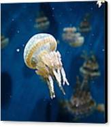 Spotted Jelly Fish 5d24950 Canvas Print by Wingsdomain Art and Photography