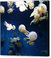 Spotted Jelly Fish 5d24952 Canvas Print by Wingsdomain Art and Photography