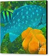 Spotted Surgeon Fish Canvas Print by John Malone