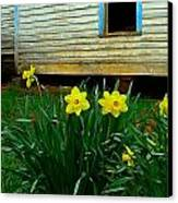 Spring At The Old Home Place Canvas Print by Julie Dant