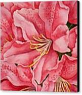 Spring Azalea Canvas Print