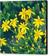 Spring Canvas Print by Barbara Shallue