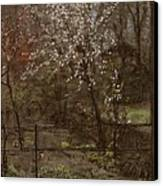 Spring Blossoms Canvas Print by Henry Muhrmann