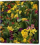 Spring Colour II Canvas Print by Maeve O Connell