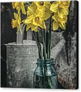 Spring Daffodil Flowers Canvas Print by Edward Fielding