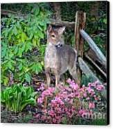 Spring Deer Canvas Print by Crystal Joy Photography