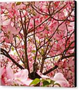 Spring Pink Dogwood Tree Blososms Art Prints Canvas Print by Baslee Troutman