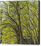 Spring Time In Bryant Park New York Canvas Print by Angela A Stanton