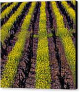 Spring Vinyards Canvas Print by Garry Gay