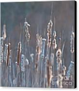 Spring Whisper... Canvas Print by Nina Stavlund