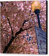 Springtime In Charlotte Canvas Print by Lydia Holly