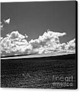 Sprouting Field Of Sunflowers And Field Of Rape At Back. Auvergne. France Canvas Print