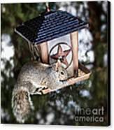 Squirrel On Bird Feeder Canvas Print by Elena Elisseeva